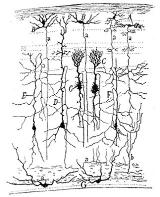 Artistic Neuron Drawing